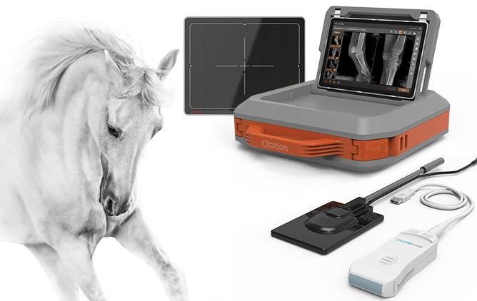Veterinary Digital X Ray Imaging Solutions