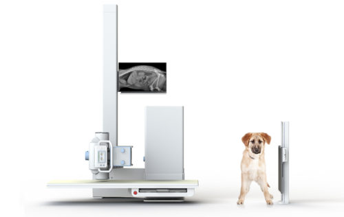 Horizontal Beam Radiography – A Useful Technique in Dogs & Cats